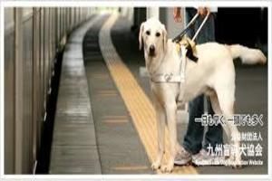 盲導犬.jpg
